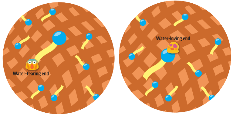 Like a magnet has two ends, one end of the surfactant is attracted to water molecules while the other is repelled.