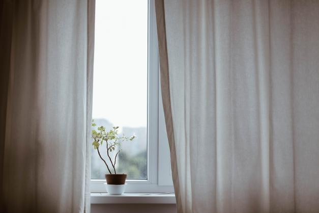 Plant in a window with curtains